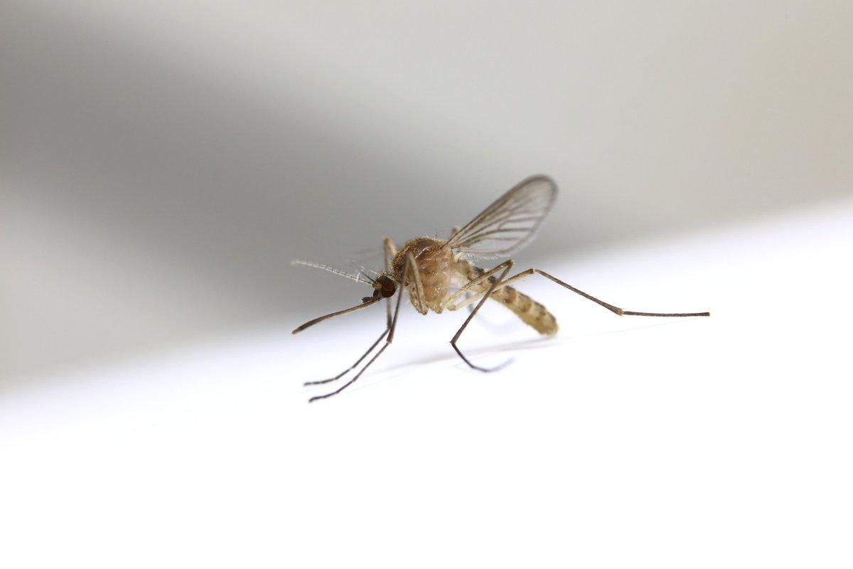 Обработка от комаров в Москве – Уничтожение клещей СЭС | Dezer.ru