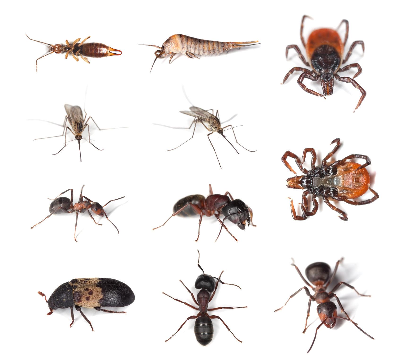 Уничтожение насекомых в Москве – Обработка от насекомых СЭС | Dezer.ru